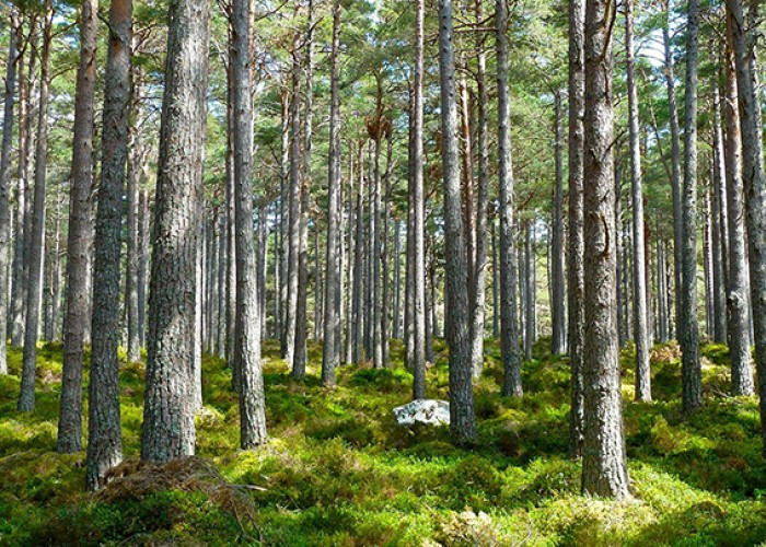 forest-272595_1920
